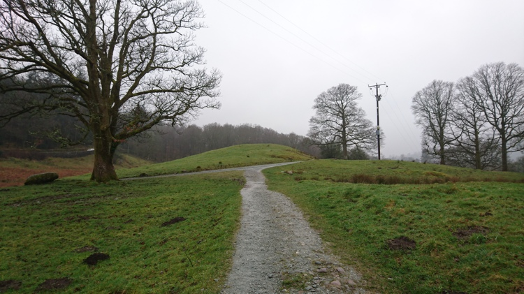 Path Leading to the Farm Track