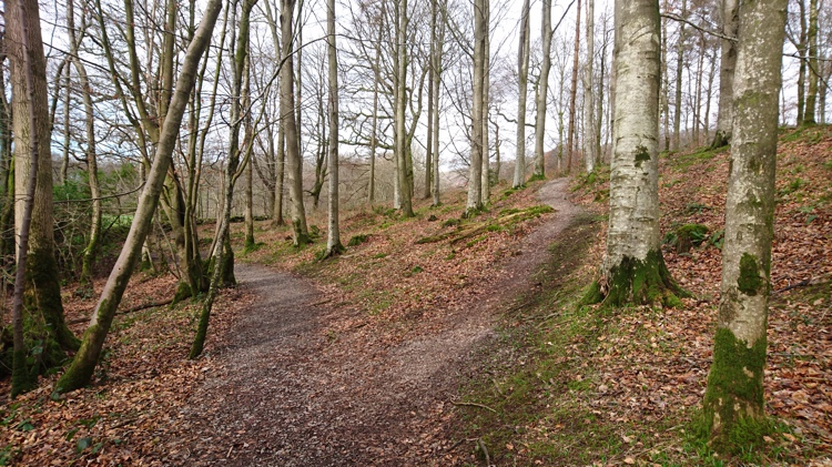 Woodland Path along the Low Wood Walk (taken in Autumnal Months) will be flourishing with Bluebells