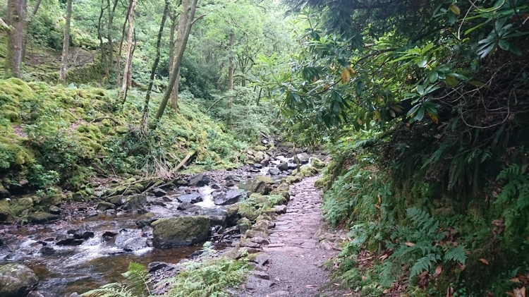 The Woodland Path along the Ghyll