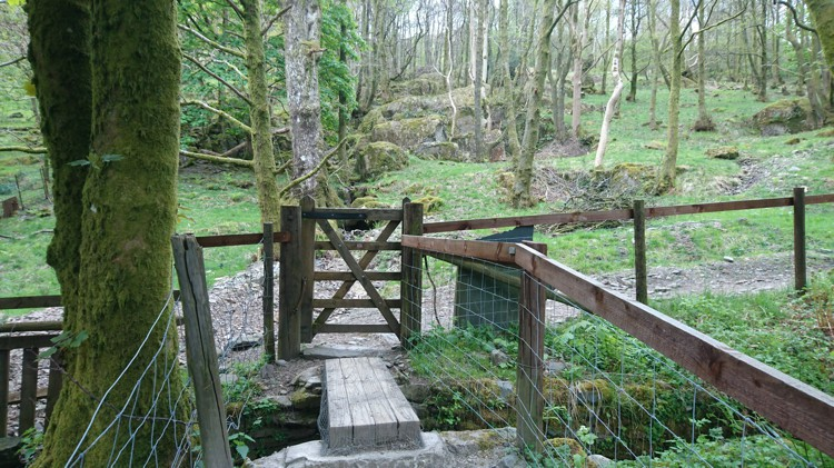 The Gate into the Woodland