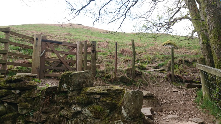 The Gate at the End of the Woodland