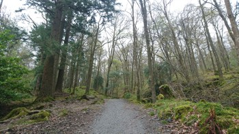The Woodland Track
