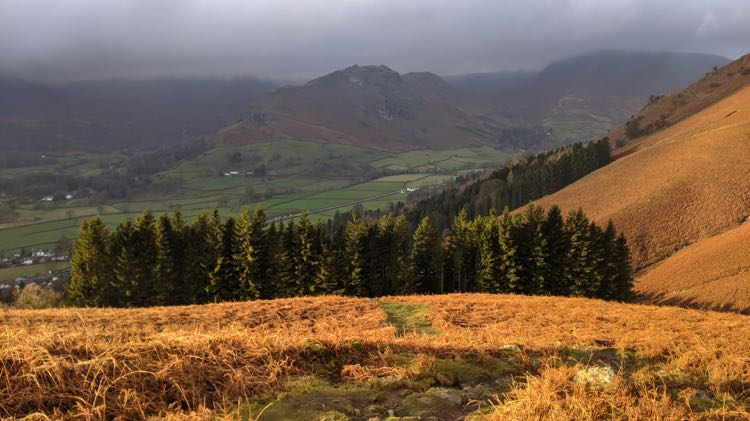 Forestside Plantation with Helm Crag in the background