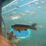 The Lakes Aquarium